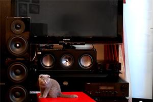 IXBT.com: Видеообзор напольных трехполосных колонок Arslab Classic 3